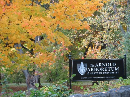 Arnold Arboretum Clean-Up Day: Love your Block